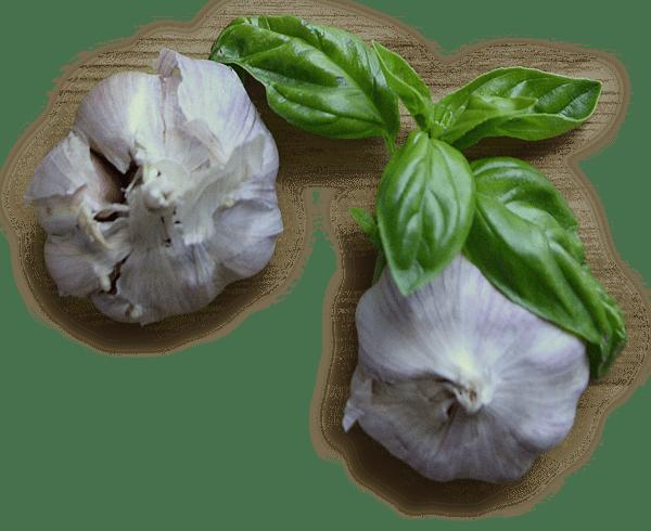 Alice's Fresh Pasta Garlic